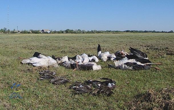 На Одещині град убив близько 300 птахів