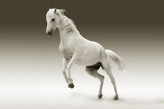 أجمل صور خلفيات خيول 9