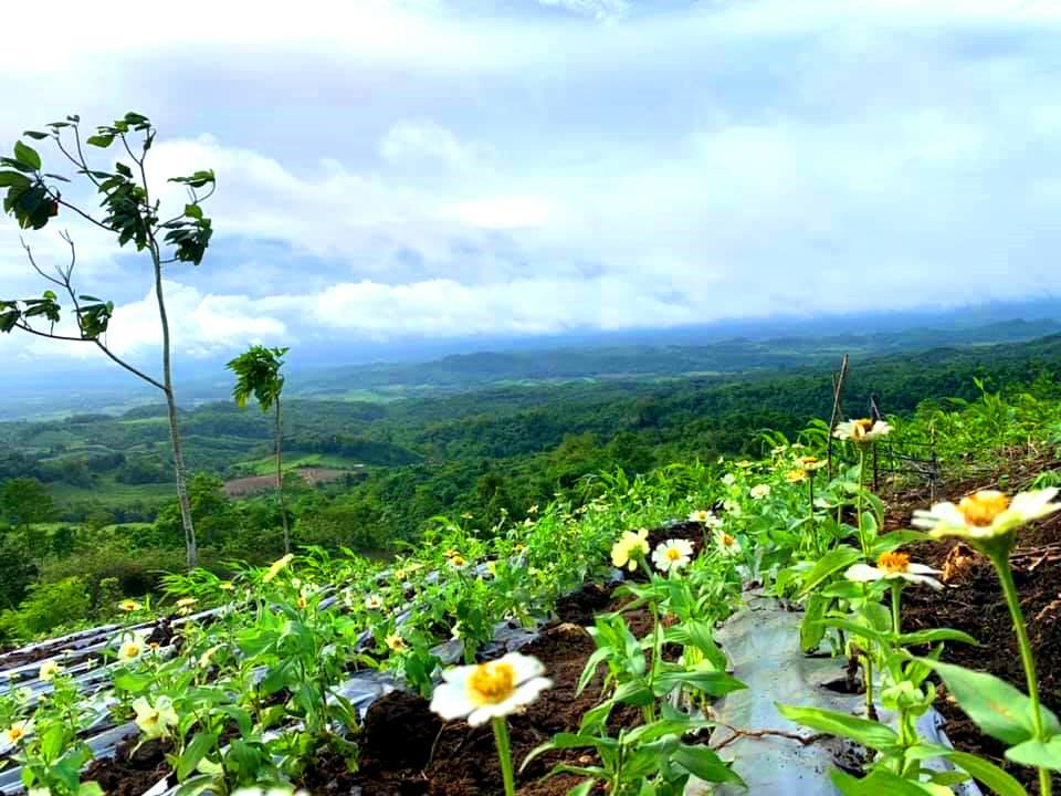 Agcararao Mountain View Passi City