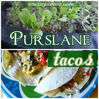 http://www.littlebigharvest.com/2014/07/purslane-tacos.html