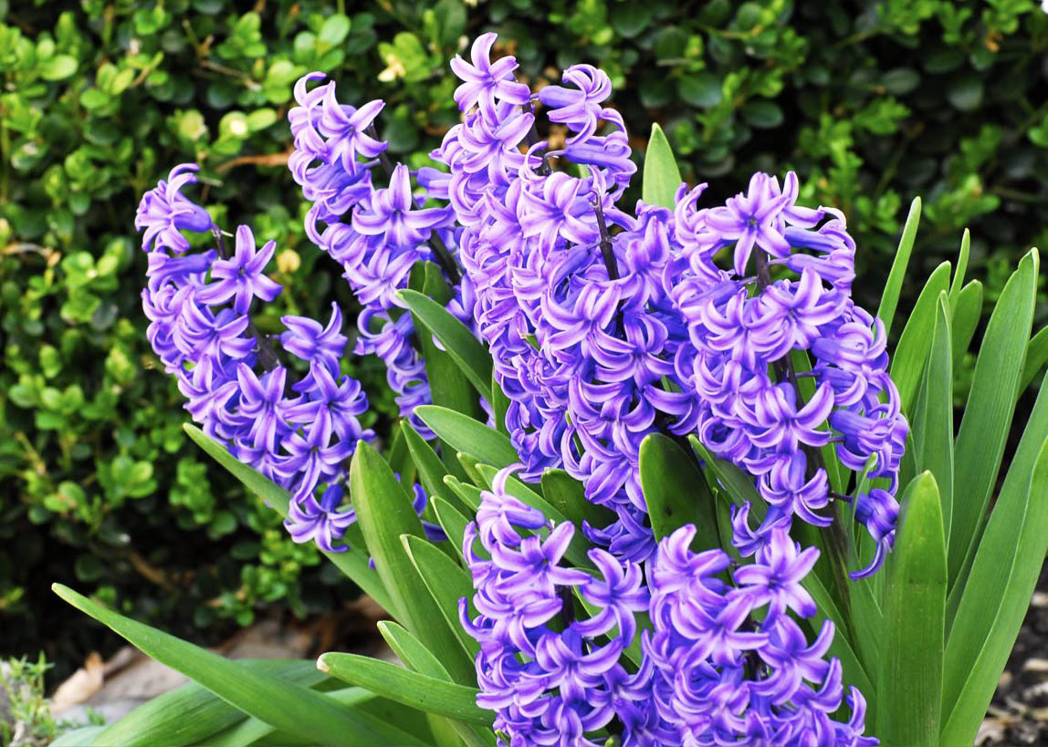 Purple flowers and names types of red flowers names purple flowers and names 1148 x 819 dhlflorist Image collections