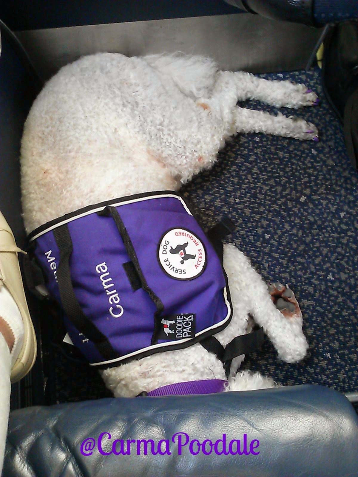 carma sleeping on plane