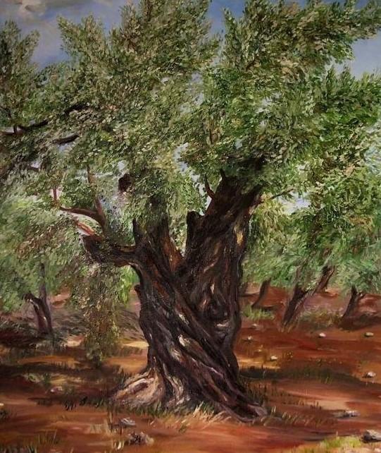 valabris istoria l 39 olivier arbre sacr. Black Bedroom Furniture Sets. Home Design Ideas