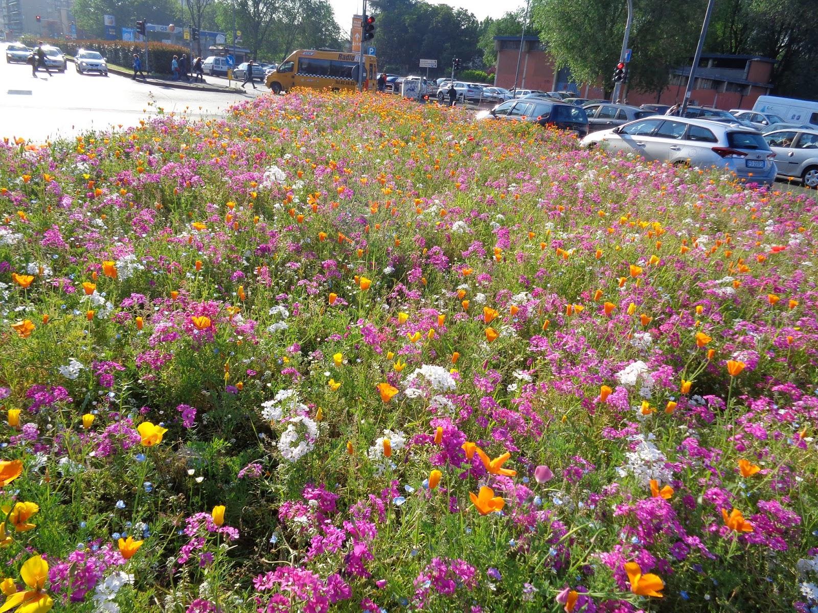 Foto diario di una giardiniera curiosa fuori orticola for Immagini giardiniere
