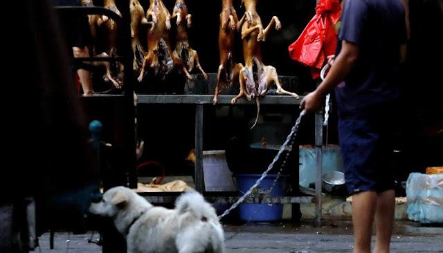 Feria de carne de perro en china