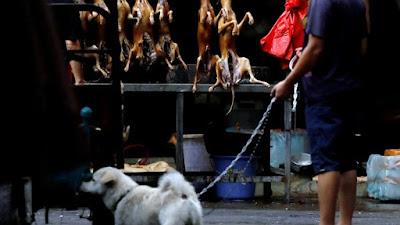 En medio de la pandemia, China abrió su feria anual de carne de perro