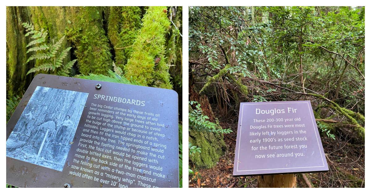 logging history washington