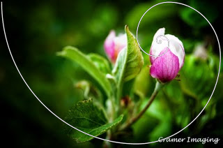 Cramer Imaging's professional quality nature photograph of a blooming apple blossom flower on a tree in Pocatello, Bannock, Idaho