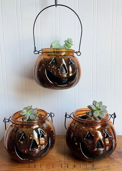 Succulent Holders in Jack O' Lantern Jars