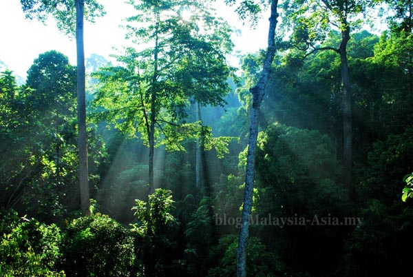 Rainforest Picture in Sabah