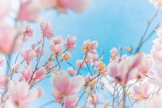 صور ورد جميلة