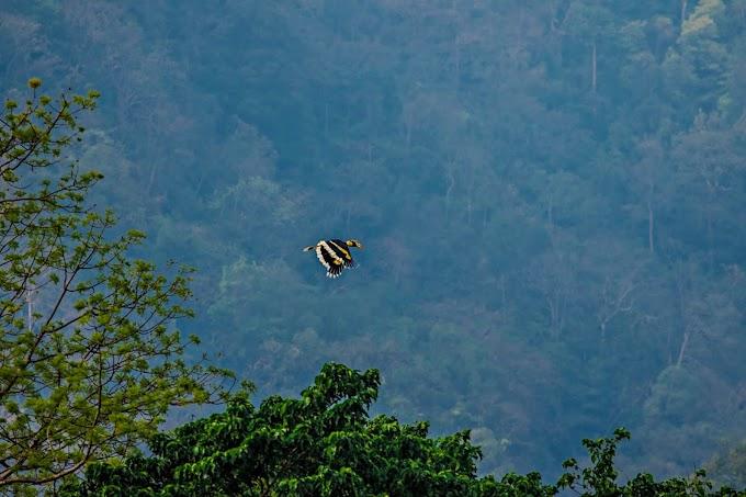Hornbill World