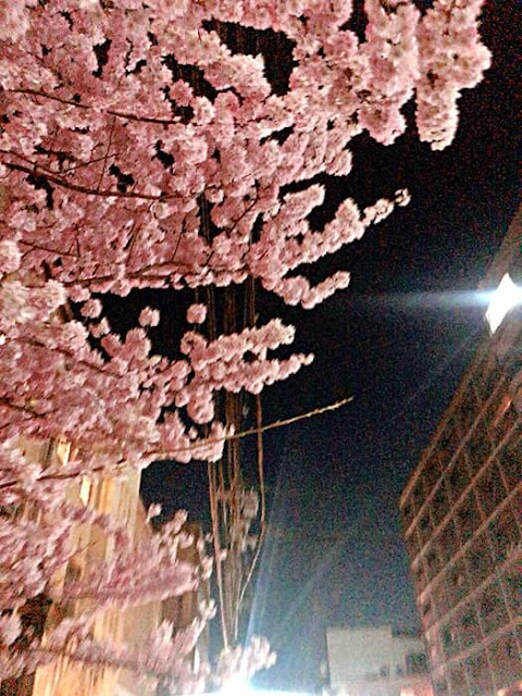 4月のミヤケ出勤日お知らせ