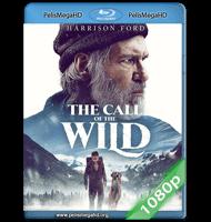 EL LLAMADO SALVAJE (2020) 1080P HD MKV ESPAÑOL LATINO