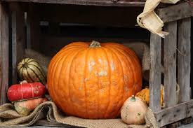 17 Cute Halloween Decoration Ideas