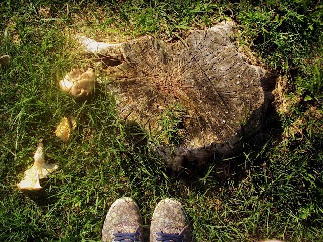 cogumelos - outono - a Bella e o Mundo