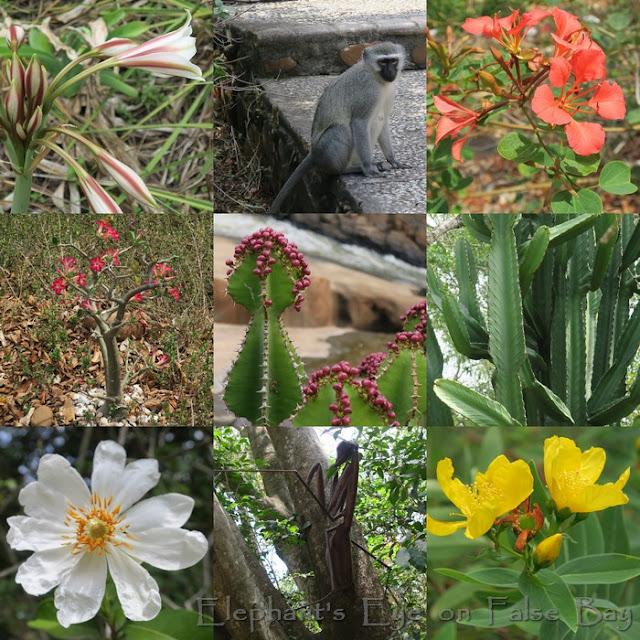 Lowveld NBG flowers in September