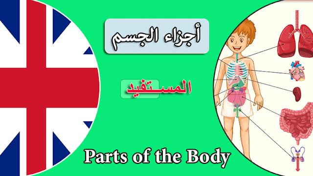 """محادثات اللغة الانجليزية أجزاء الجسم """"Parts of the Body"""""""