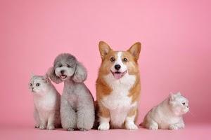 Thiết kế trang web dành cho thú cưng
