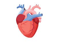 Bagaimanakah Peranan Jantung dalam Perspektif Islam ?