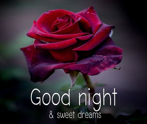 good night with rose flower