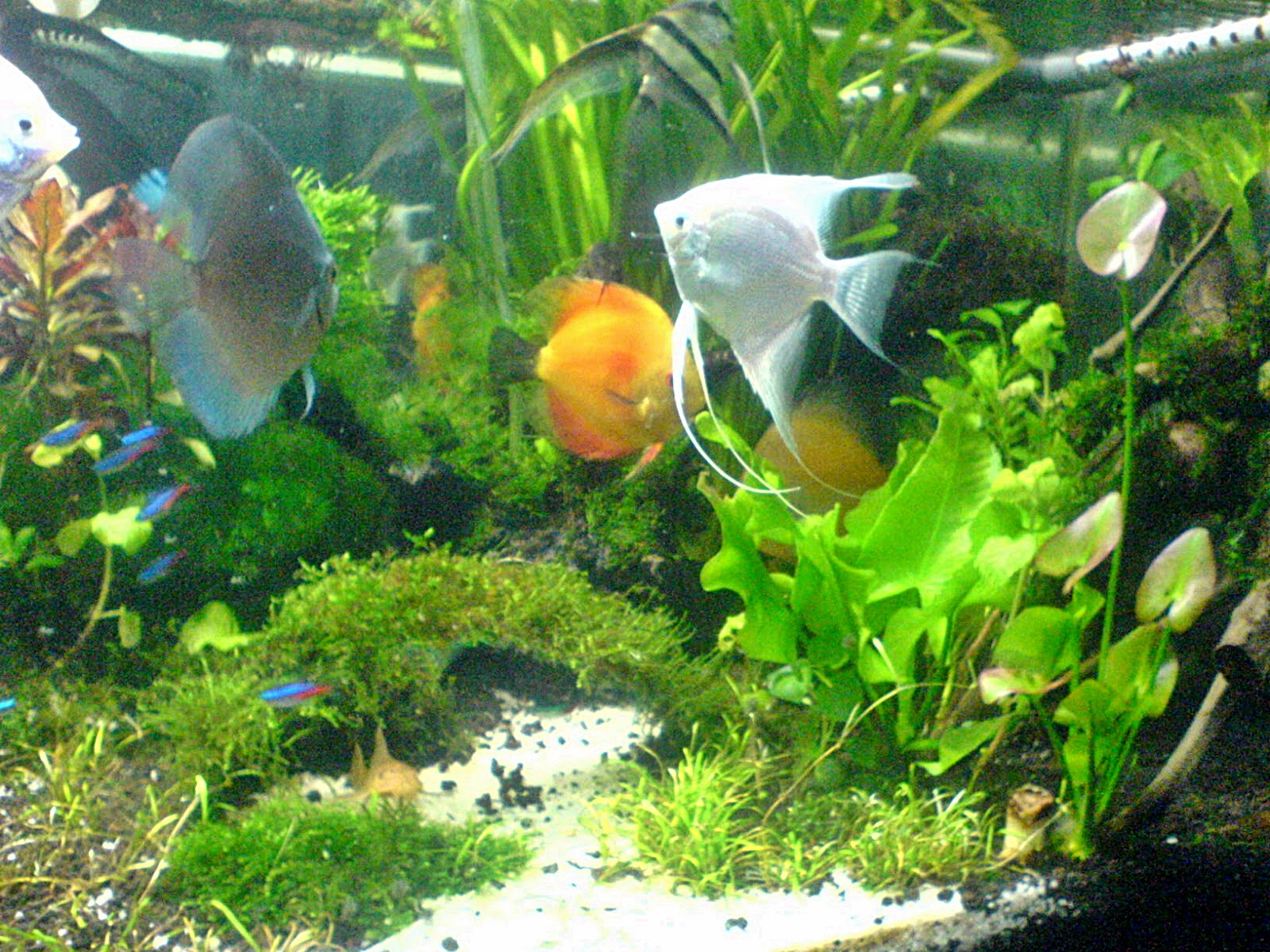 Jenis ikan ikan hias air tawar untuk aquarium menarik share the knownledge - Gambar aquascape ...