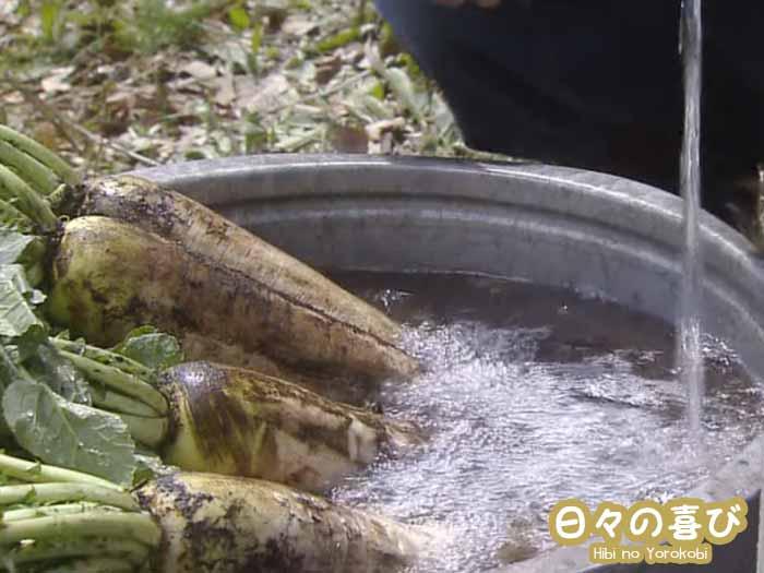 radis japonais daikon drama osen