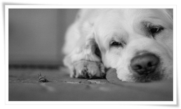 bed bug dog training,dog training orange county,bedbug dog training,bite dog training,training,bed bugs for training dogs,ipm training,bed bug vials for training,decoy training,bed bug inspection training,protection dog training,pest control training,pest management training,scent detection training,dog training (literature subject),#bedbugdogtraining,train bed bug dogs,bedbug sniffing dog,bed bug sniffing dog,bed bug inspection using canines,finding