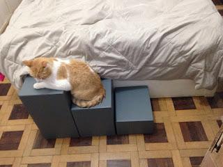 escadas para gatos camas altas