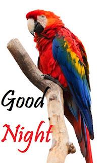 good night bird photo