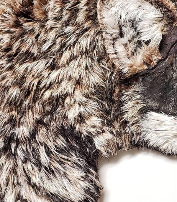 detail of wolf fur made of hanji paper fibers