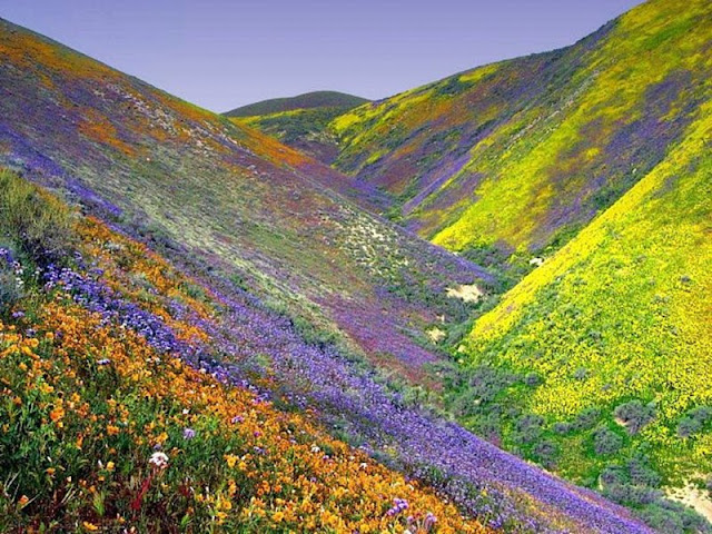 The Kaleidoscope Of Colours In The Valley Of Flowers, Uttarakhand