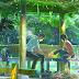 El Jardín de las Palabras, de Makoto Shinkai, tendrá adaptación a obra de teatro en Occidente