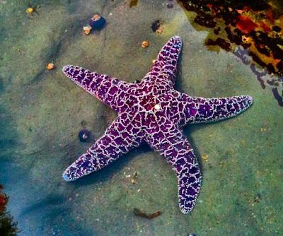 50 Gambar Hewan Laut Berwarna Terbaru