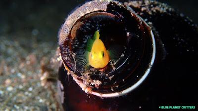 macro 微距 潛水 scuba diving 水攝 underwater photography