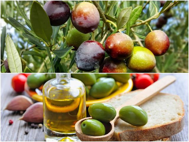 olivi croati