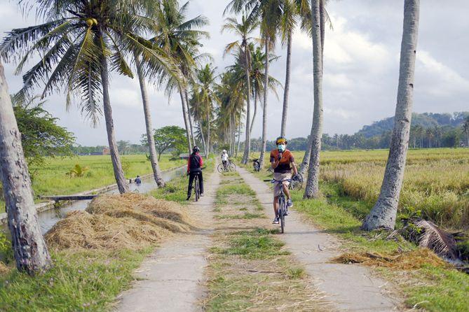 Berfoto di Jejeran Pohon Kelapa Moyudan