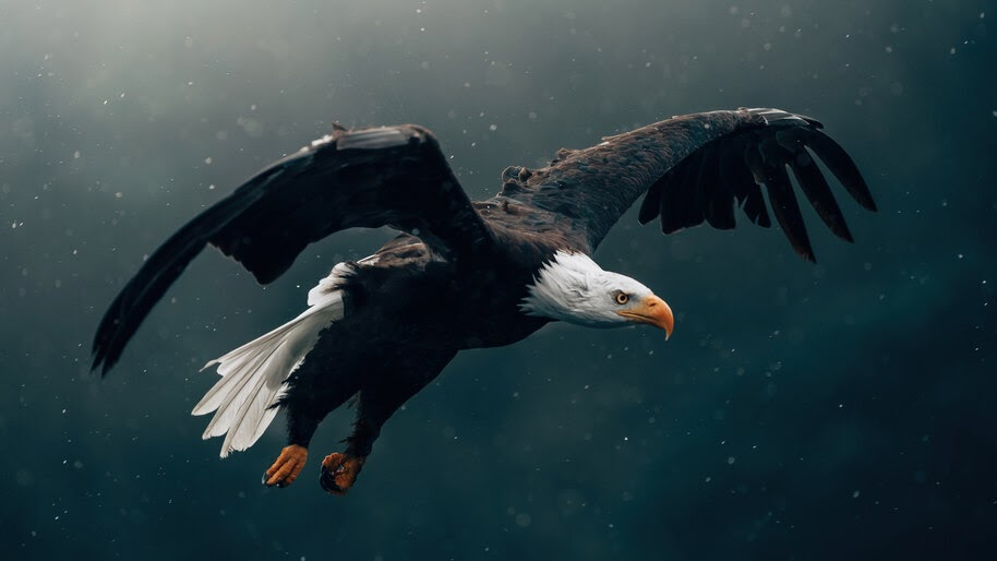 #4.3354, Eagle, Flying, Bird, Picture, 4K Wallpaper