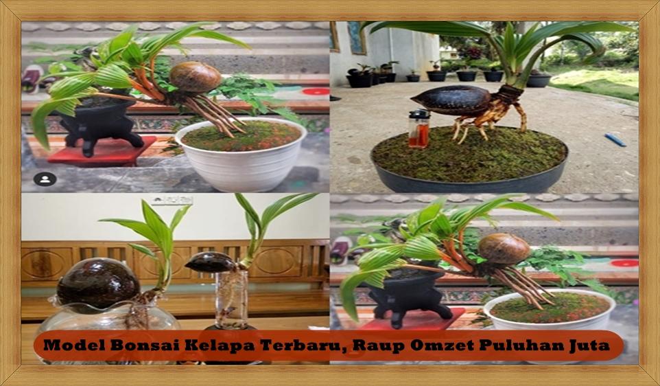 Bisnis Model Bonsai Kelapa Terbaru, Raup Omzet Puluhan Juta