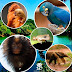 Zoológico e Zoo Safári retomam visitação dia 13 de julho