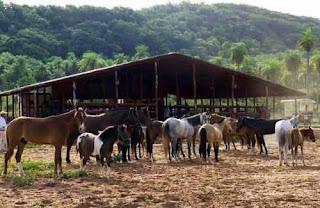 At Yetiştirme Çiftliği Kurmak
