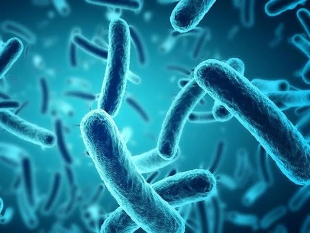 जीवाणु क्या होता है - what is bacteria Hindi