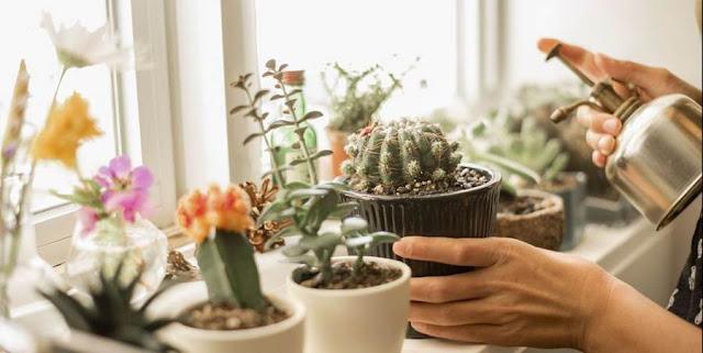 15 Jenis Kaktus Terbaik yang Dapat Anda Tumbuhkan di Rumah