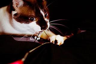 tudo-gato-linha-02a.jpg