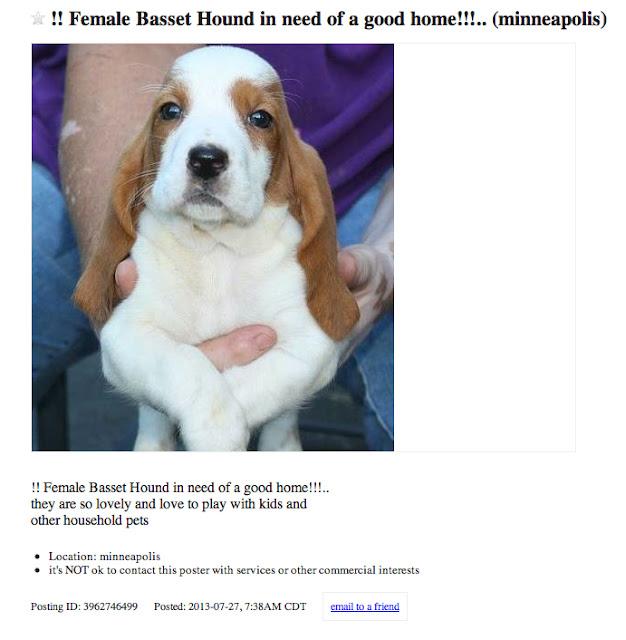 Honey I Shrunk The House: The Temptation Of A Basset Hound