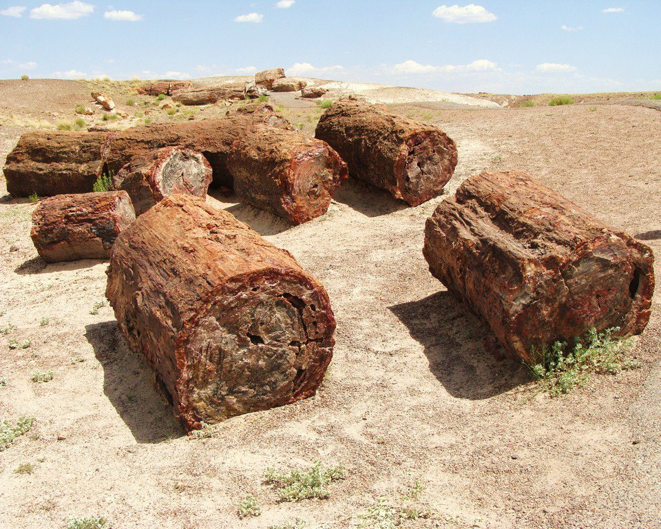 Petrified Forest National Park Navajo and Apache County 3