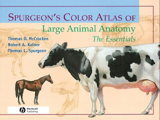 Spurgeon's Color Atlas of Large Animal Anatomy: The Essentials 2nd Edition