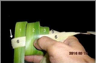Cara Anyam Ketupat Paling Mudah