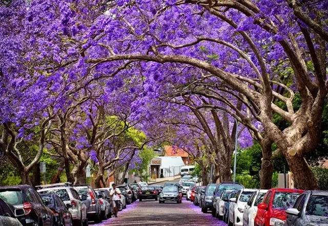 Locals suggest what to do in Sydney