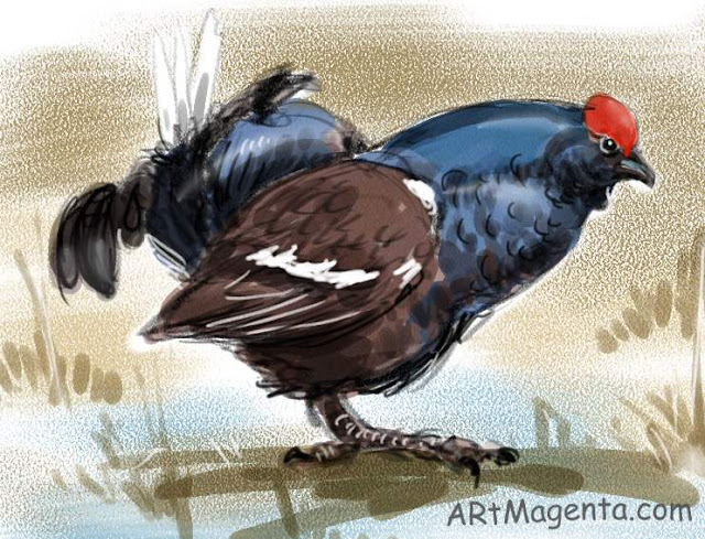 Black Grouse, a bird sketch by Artmagenta